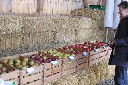 Tag der offenen Tür, Lageräpfel, Apfelvielfalt, Apfelmarkt