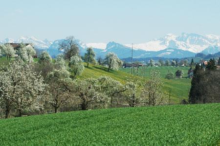 Blick in die Berg, BIO HOf, Wädenswiler Berg